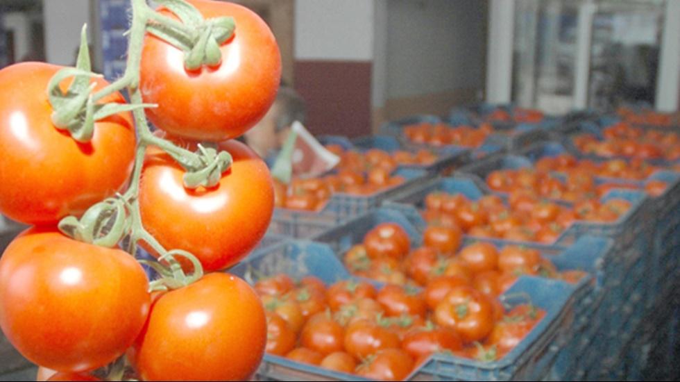 Rusya, Türkiye'nin domates kotasını 100 binden 150 bin tona çıkardı