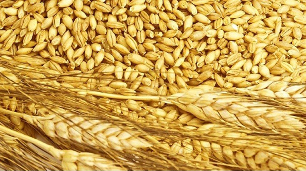 Rusya'dan Türkiye'ye buğday sevkiyatı yüzde 40 arttı