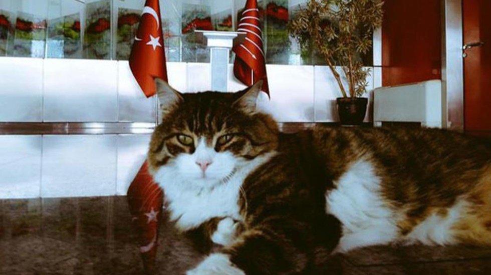 Kılıçdaroğlu, 'Dünya Kediler Günü'nü kutladı