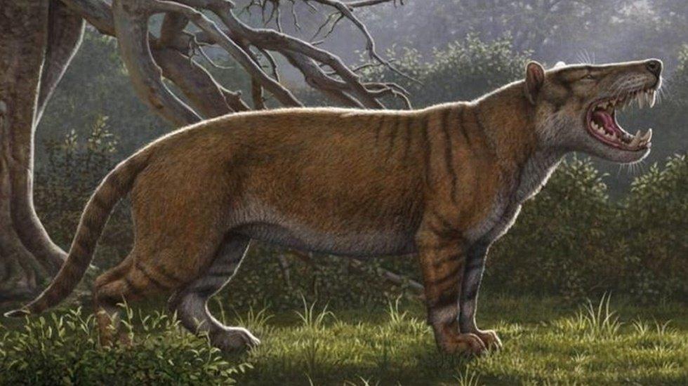 Bir dolapta milyonlarca yıl önce yaşamış hiper etçil dev bir aslan fosili bulundu