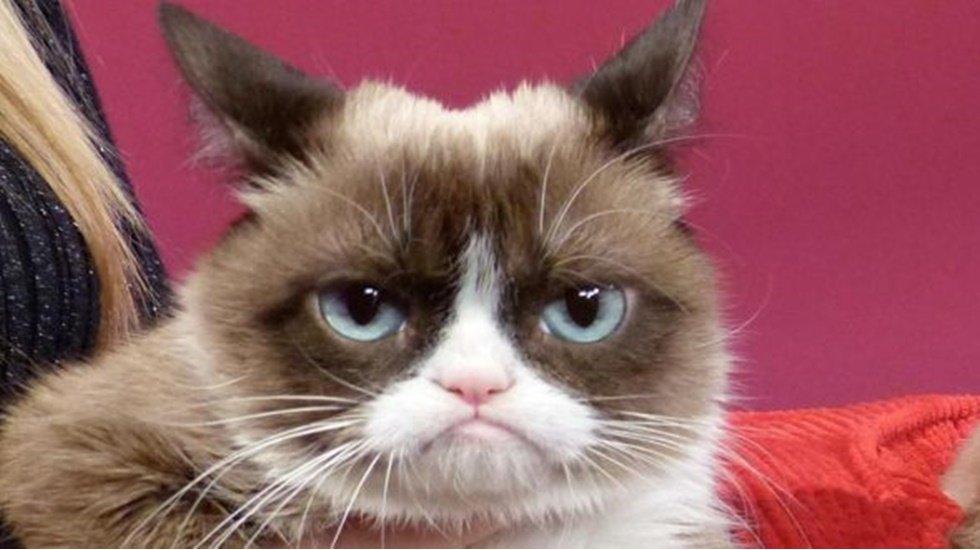 İnternet fenomeni 1 milyon dolarlık somurtkan kedi hayatını kaybetti