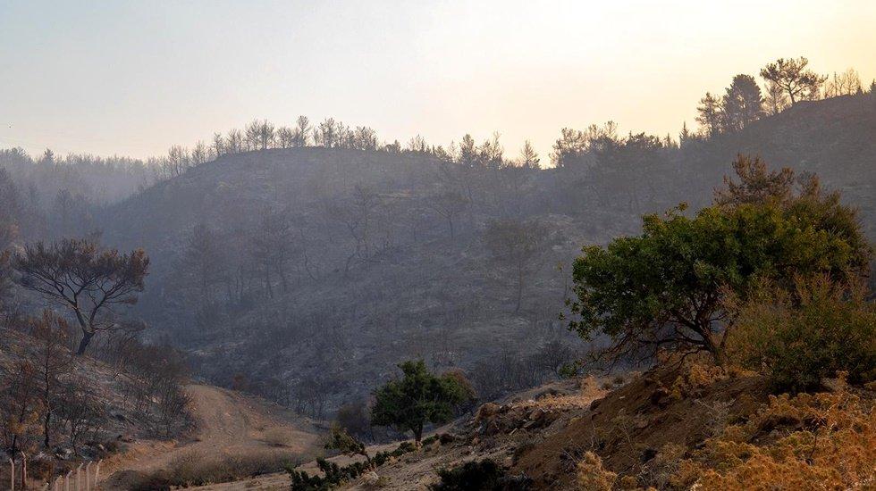 İzmir'deki yangında Karşıyaka büyüklüğünde orman alanı yandı